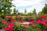 23554 Neersville Corner Terrace - Photo 12