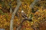 17321 Virginia Pine Way - Photo 34