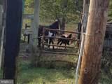 16420 Cedar Lawn Drive - Photo 9