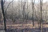 27.53 Acres Hickory Tree Rd - Photo 16