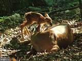 6767 Accipiter Drive - Photo 85