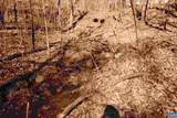 226 Hooded Warbler Lane - Photo 5