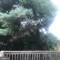 4184 Pleasant Meadow Court - Photo 17