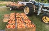 8838 Apple Harvest Drive - Photo 30