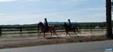 Shenandoah Crossing Dr Drive - Photo 26