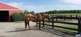 Shenandoah Crossing Dr Drive - Photo 6