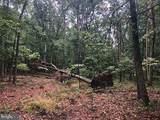 53.5 AC Off Timber Ridge Rd - Photo 10