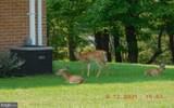 22818 New Shawnee Road - Photo 16