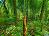 0 Wilderness Ln - Photo 3