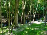 29172 Shady Creek Lane - Photo 6