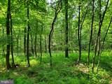Bear Garden Trail - Photo 60