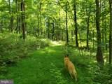 Bear Garden Trail - Photo 62