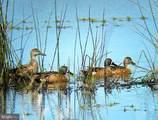 6201 & 6205 Swan Creek Road - Photo 140