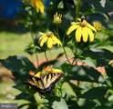 339 Whorton Hollow Road - Photo 39