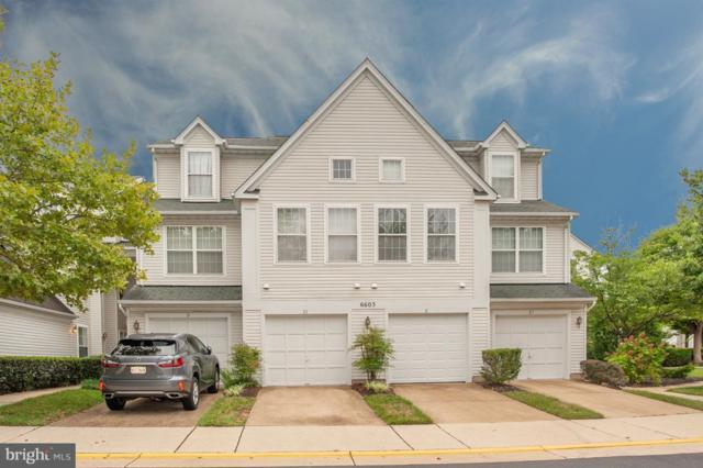 6603 Netties Lane #1704, ALEXANDRIA, VA 22315 (#1002114592) :: The Withrow Group at Long & Foster