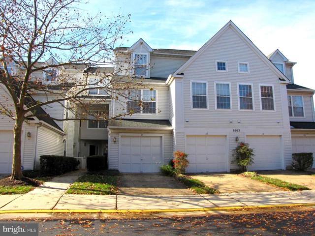 6603 Netties Lane #1704, ALEXANDRIA, VA 22315 (#VAFX104336) :: The Putnam Group