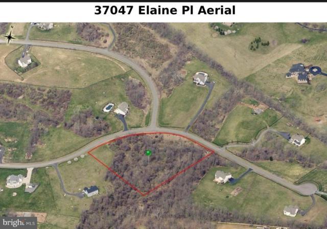 37047 Elaine Place, PURCELLVILLE, VA 20132 (#VALO352880) :: LoCoMusings