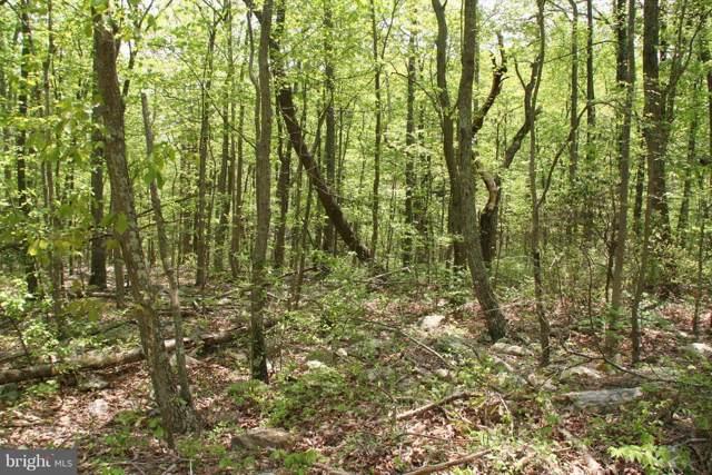 517 Puma Trail, WINCHESTER, VA 22602 (#VAFV154872) :: The Dailey Group