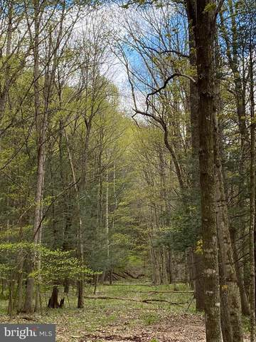 Lot 7 Middle Cove Rd, LOST CITY, WV 26810 (#WVHD105954) :: Peter Knapp Realty Group