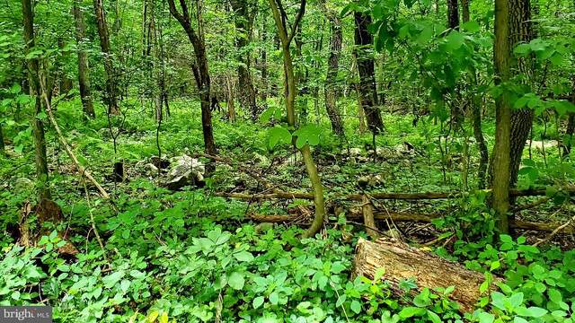 Lot 3 Bloody Spring Road, BERNVILLE, PA 19506 (#PABK360884) :: Ramus Realty Group