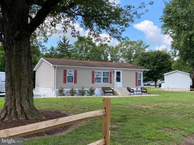 6045 Flamingo Drive, RHODESDALE, MD 21659 (#MDDO125774) :: RE/MAX Coast and Country