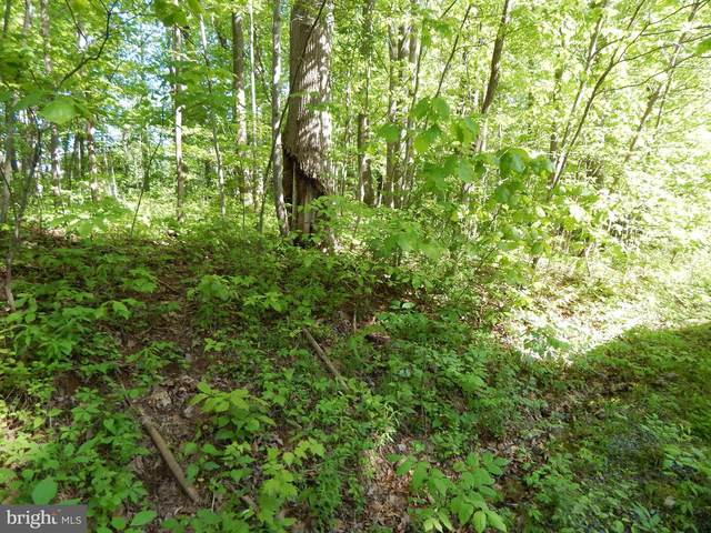 Potomac Blvd, FALLING WATERS, WV 25419 (#WVBE180386) :: Better Homes Realty Signature Properties