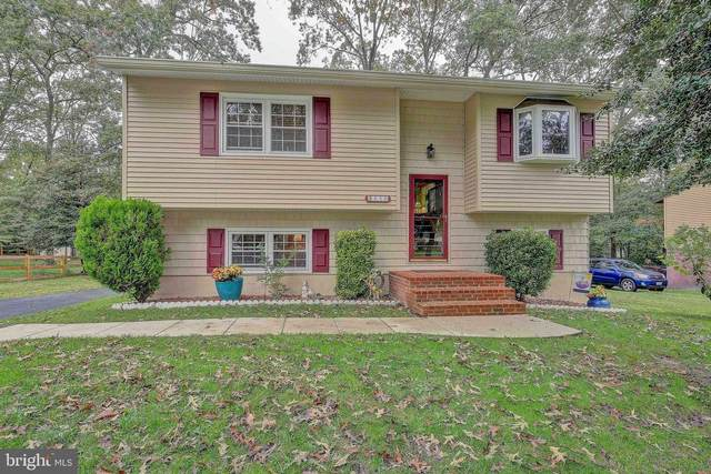 650 Cedar Drive, PASADENA, MD 21122 (#MDAA449248) :: Great Falls Great Homes