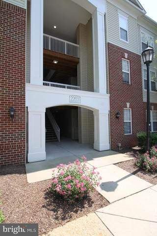 22655 Blue Elder Terrace #203, BRAMBLETON, VA 20148 (#VALO425518) :: Great Falls Great Homes