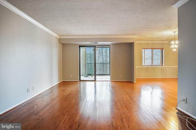 5904 Mount Eagle Drive #106, ALEXANDRIA, VA 22303 (#VAFX1173768) :: Jacobs & Co. Real Estate
