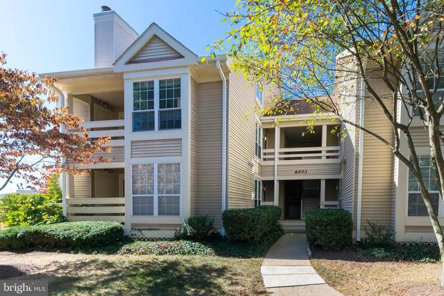 6603 Jupiter Hills Circle F, ALEXANDRIA, VA 22312 (#VAFX1200120) :: Grace Perez Homes