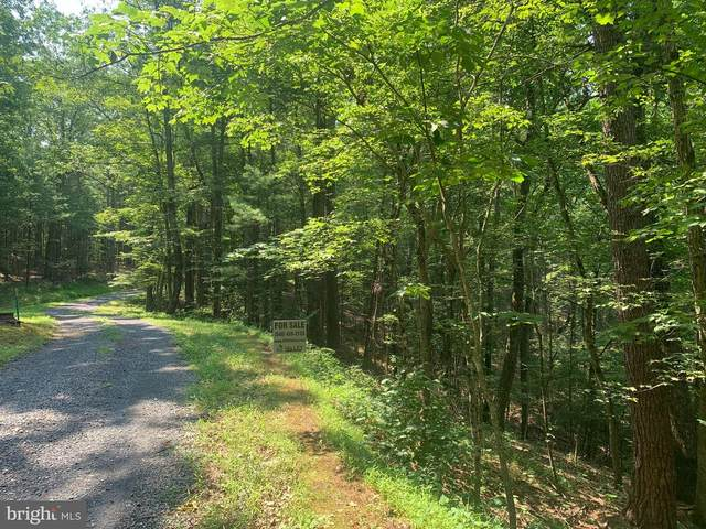 Chestnut Ridge Rd, MOUNT JACKSON, VA 22842 (#VASH2000252) :: Nesbitt Realty