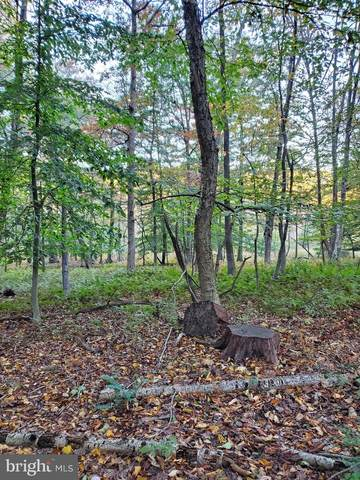 Catoctin Hollow Road, THURMONT, MD 21788 (#MDFR2007296) :: VSells & Associates of Compass