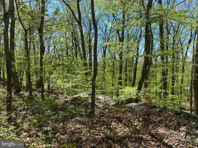 D-14 Mountain Lion Lane, AUGUSTA, WV 26704 (#WVHS115622) :: The Sky Group