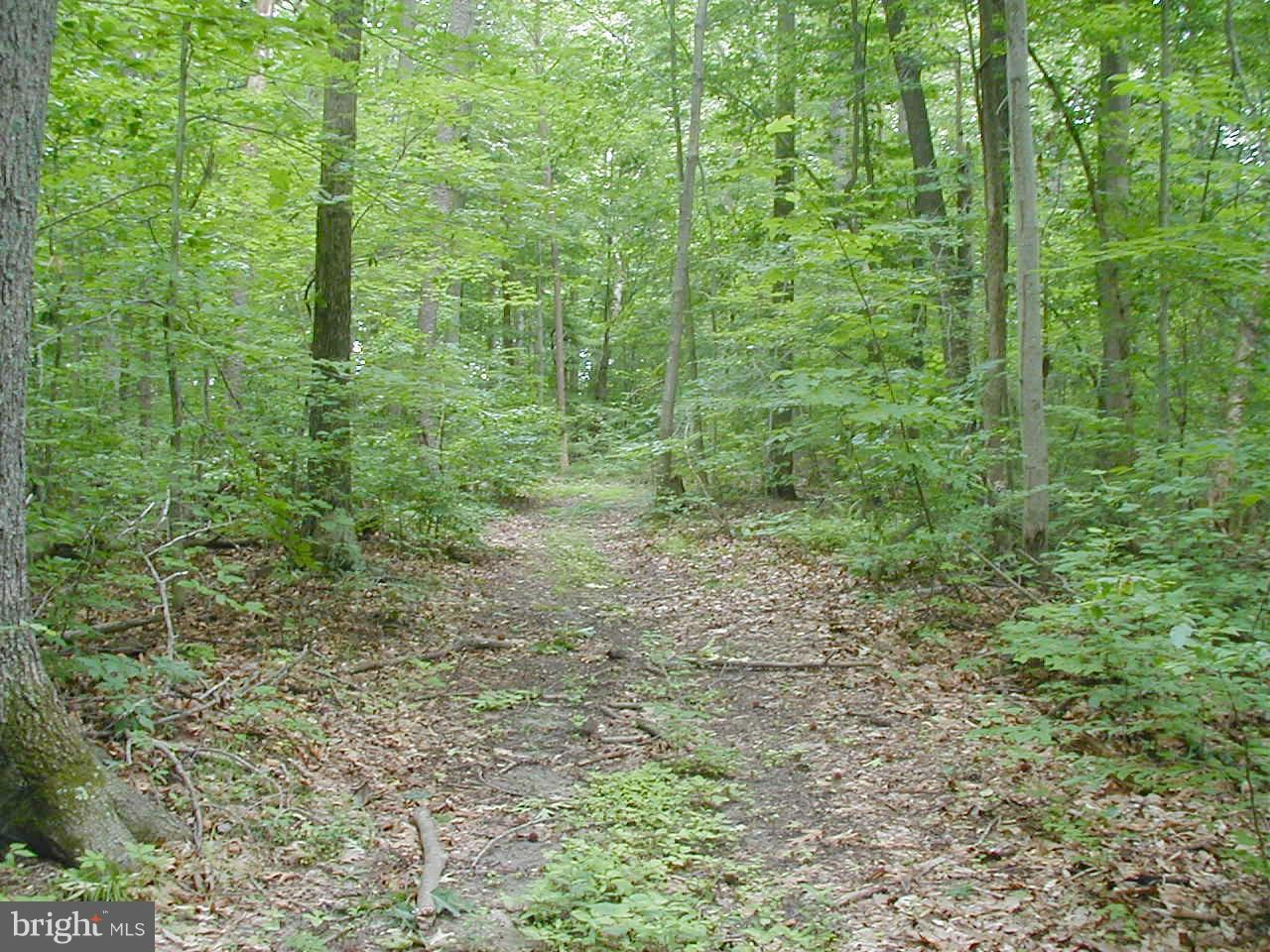 Candy Hill Road - Photo 1