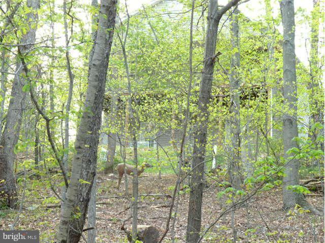 Lot 69 Willow Lane, BASYE, VA 22810 (#1000120923) :: AJ Team Realty