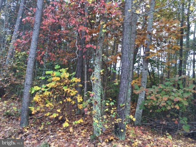 157 John Paul Jones Drive, RUTHER GLEN, VA 22546 (#1000142681) :: Remax Preferred   Scott Kompa Group