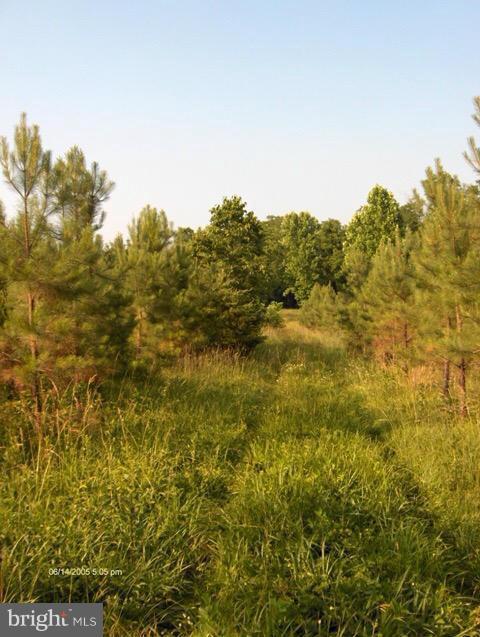 Bowler Creek-State Route 620- Road, APPOMATTOX, VA 24522 (#1000161111) :: Great Falls Great Homes