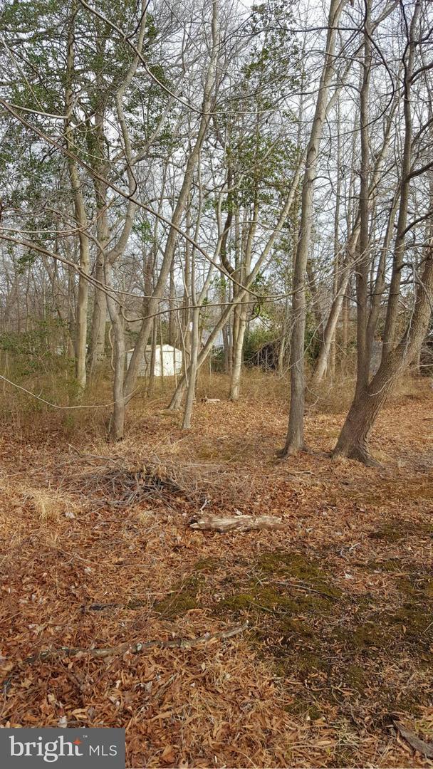 3829 Twin Oaks Drive, EDGEWATER, MD 21037 (#1004403415) :: Colgan Real Estate