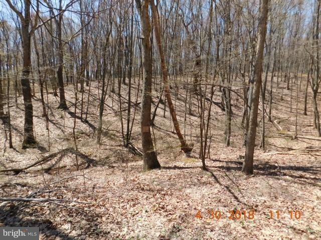 Lot 26 North River Wilderness, DELRAY, WV 26714 (#1000417896) :: SURE Sales Group