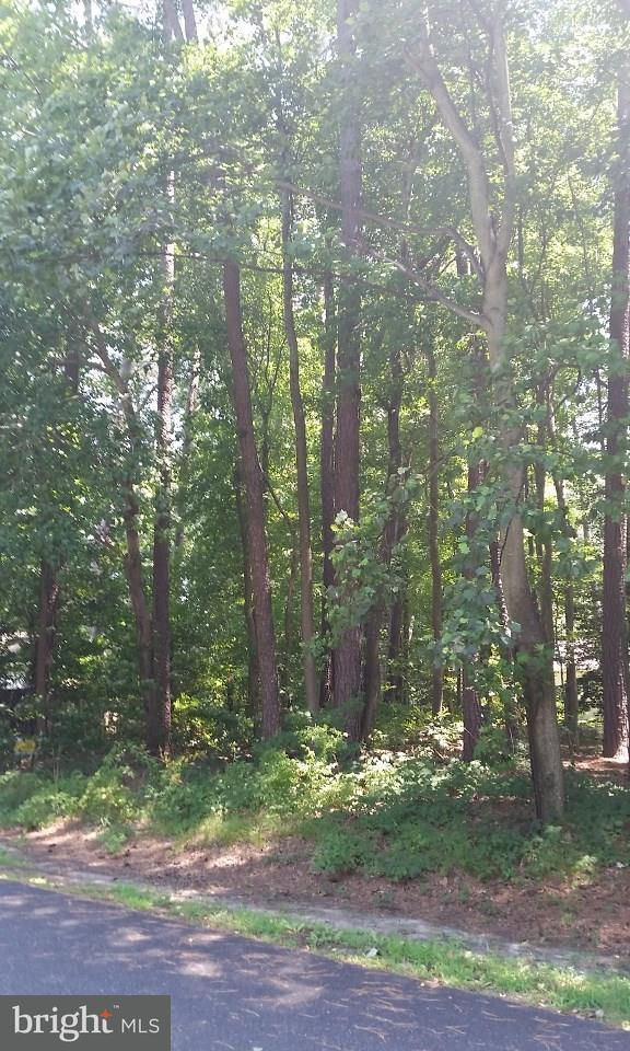 Lot 3, Section F Prince Georges Drive, DAGSBORO, DE 19939 (#1001565676) :: The Rhonda Frick Team
