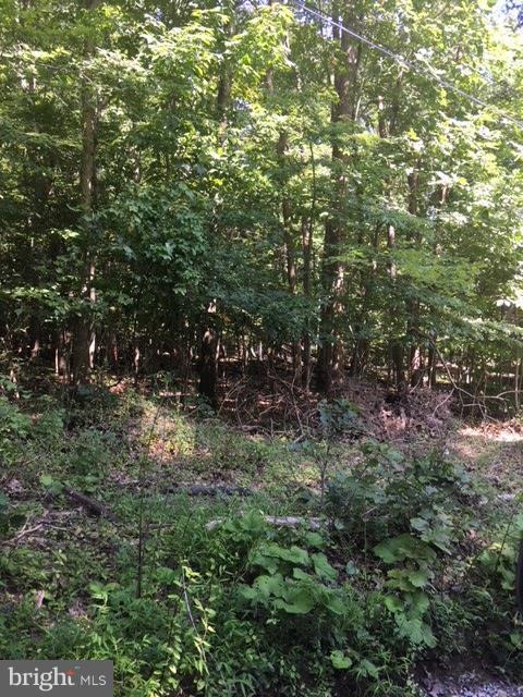 Black Oak Lane, BLUEMONT, VA 20135 (#1002251826) :: Gail Nyman Group