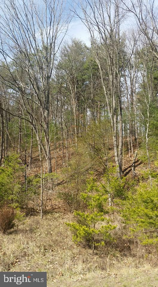 Lot 6 Mountain Brook Lane, BENTONVILLE, VA 22610 (#VAWR136386) :: Advance Realty Bel Air, Inc