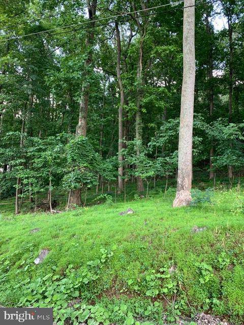 Wilderness Road, LINDEN, VA 22642 (#VAWR137604) :: The Daniel Register Group