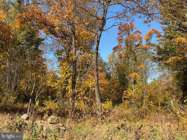 Morgans Mill Rd, BLUEMONT, VA 20135 (#VACL110914) :: Radiant Home Group