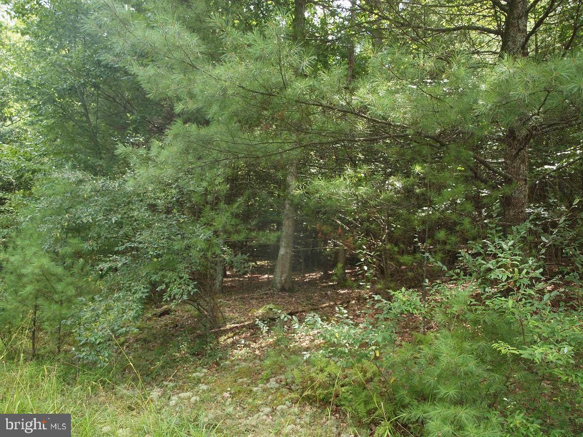 Lots 20-24 Oakwood Estates - Photo 1