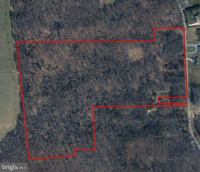 Chesterville Forest Road - Photo 1