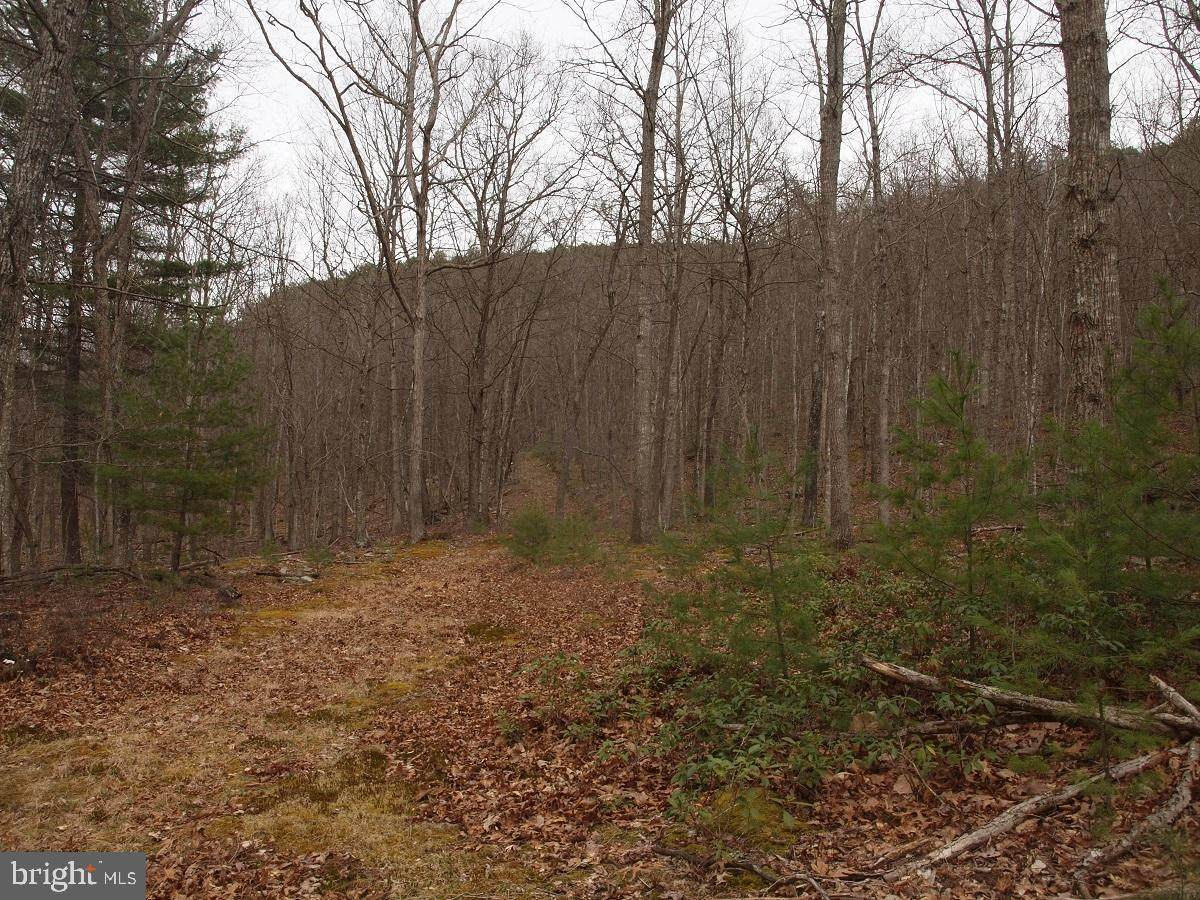 Rt 33 W- Friends Run/Judy Mountain - Photo 1