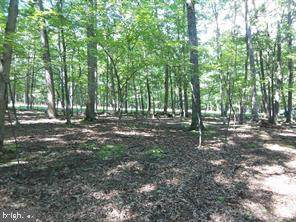 Lot 29 Honey Locust Lane - Photo 1