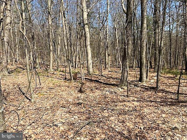 Lot 7 Middle Cove Road, MATHIAS, WV 26812 (#WVHD106102) :: AJ Team Realty