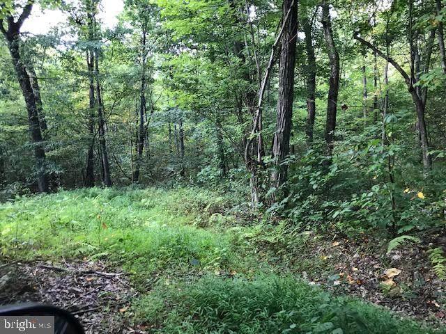 76 ACRES Back Creek Road - Photo 1